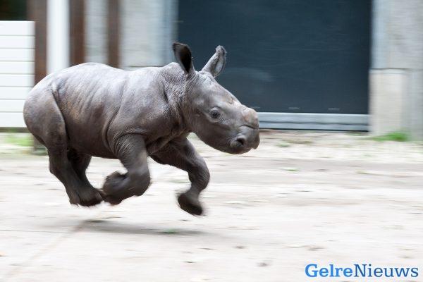 foto: Theo Kruse / Koninklijke Burgers' Zoo